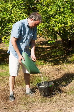 phosphate: Agricultural worker fertilizing a citrus plantation with phosphate