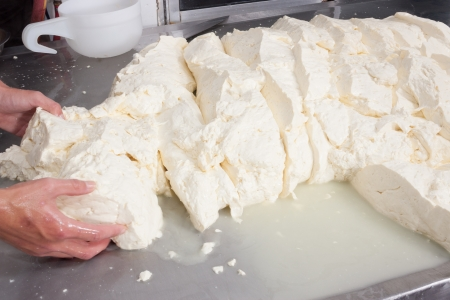 provola: Freshly fermented cheese being moved on during production process Stock Photo