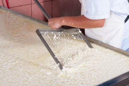 Cheese factory worker moving fermenting milk Stockfoto