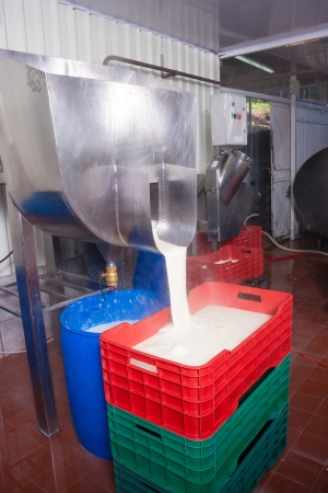 Fresh cheese being poured by a production plant machine