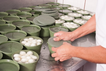 Workes hands at packaging freshly produced mozzarella cheese photo