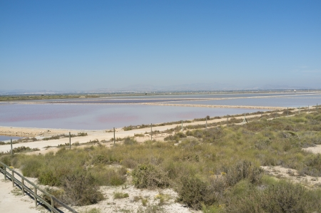 salt marsh: Pools of Santa Pola salt marsh under Mediterranean sun