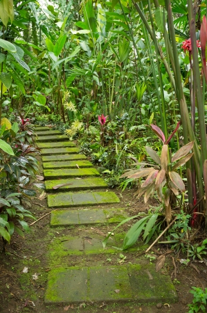 Walkway through  a dense tropical rainforest photo