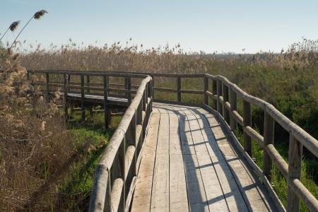 hondo: Wetlands being crossed by a  wooden footbrige