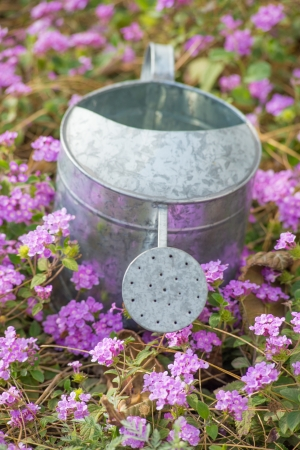A steel watering can in a flower bed, a gardening concept photo