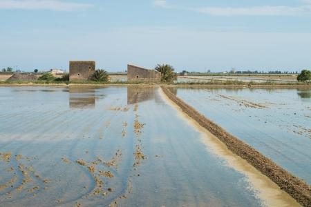 ebro: Risaie allagate dopo la semina al delta dell'Ebro, Spagna Archivio Fotografico