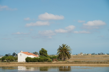 ebre: Classic Ebro delta landscape  with its flooded rice fields