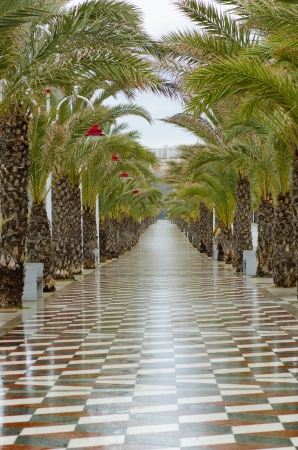 palm lined: Palm tree lined promenade on a rainy day Stock Photo