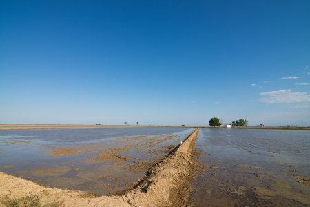 ebre: Rice plantation  just after the next crop has been seeded