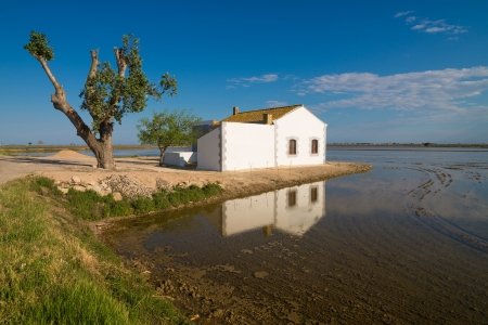 ebre: Classic Ebro delta landscape with its flooded rice paddies Stock Photo