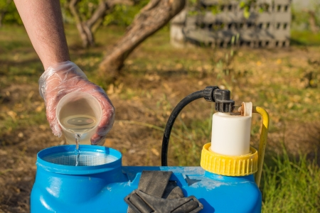 crop sprayer: Hand with plastic glove filling pesticide into a garden sprayer Stock Photo