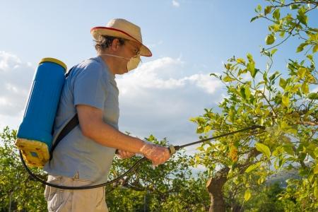 살균제: 감귤 농장 살포 농약의 농업 노동자