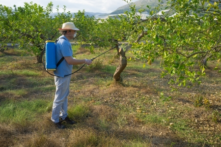 Agricultural worker spraying a citrus plantation with pesticide photo