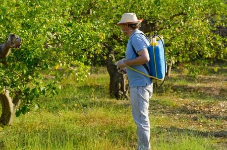 살균제: 살충제와 레몬 필드를 살포 농업 노동자