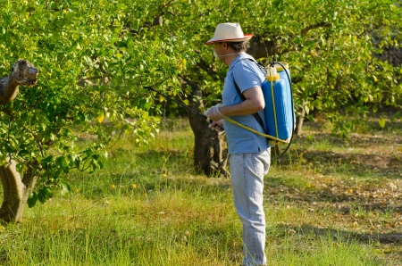 pest control: Agricultural worker spraying a lemon field with pesticide
