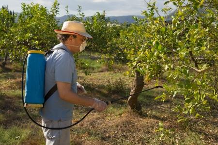 살균제: 과일 나무에 농약을 살포하는 농업 노동자 스톡 사진