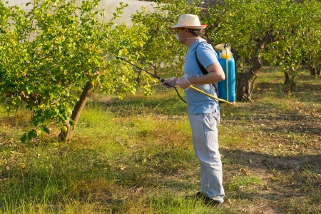 Agricultural worker spraying a lemon field with pesticide photo