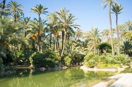 costa blanca: Tropical palm park in the heart of Costa Blanca, Spain