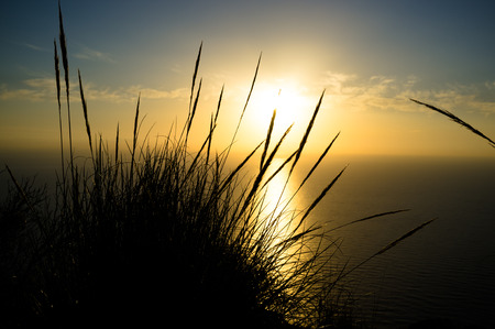 cane plumes: Esparto reeds against the background of a beautiful Mediterranean sunrise