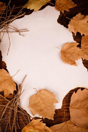 hojas secas: Las hojas secas que rodean un pedazo de pergamino, un fondo de oto�o