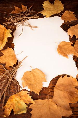 hojas secas: Las hojas secas que rodean a un pedazo de pergamino Foto de archivo