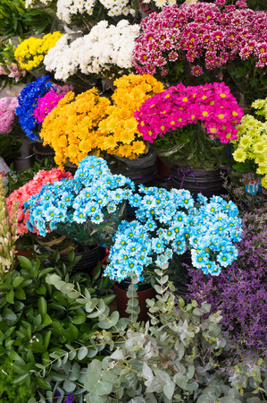 market stall: Assorted flowers at a street market stall