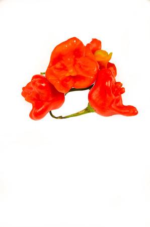 chiles picantes: Chiles rojos frescos aislados en blanco