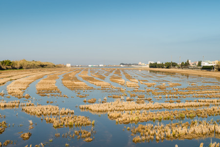 watered: Flooded rice pady in Albufera natural reserve, Valencia, Spain