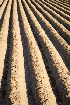 furrows: Full frame take of deep freshly ploughed furrows