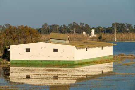 farmhouses: Wetlands, rice fields and whitewashed farmhouses, traditional Albufera landscape, Valencia, Spain Stock Photo