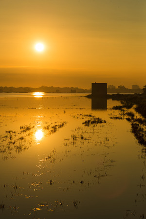 watered: Flooded rice paddy at sunrise, Albufera, Valencia, Spain Stock Photo