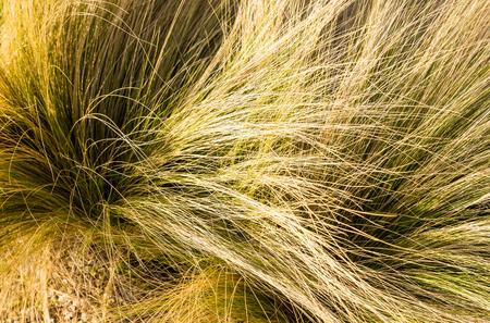 tuft: Full frame take of a lush grass tuft Stock Photo