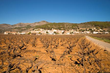costa blanca: Vineyards under Mediterranean sunshine in inland Costa Blanca, Spain