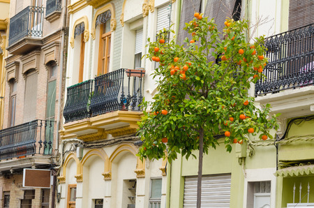 valencia orange: Charming old houses and ornamental orange trees in Valencia Cabanyal district
