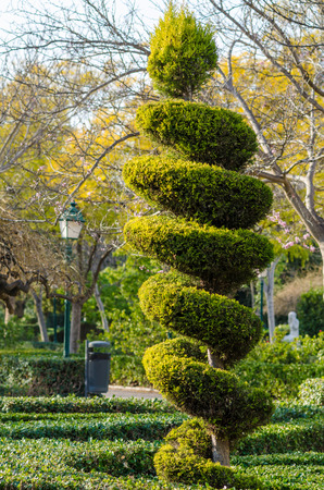 trimmed: Tall elegantly trimmed tree in a park