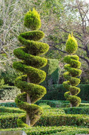 elegantly: Tall elegantly trimmed trees in a park Stock Photo