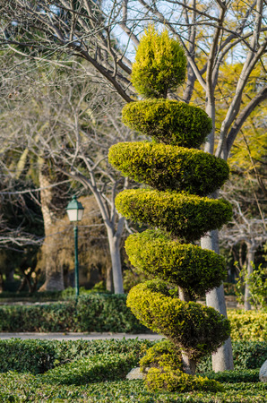 elegantly: Tall elegantly trimmed tree in a park