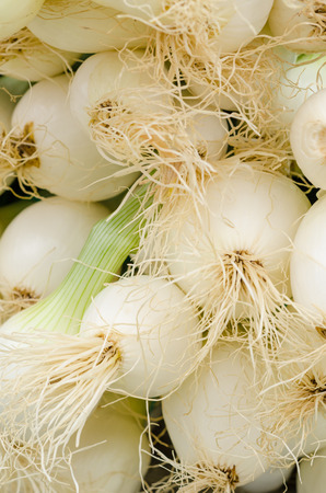 spring onions: Full frame take of many spring onions on a market stall