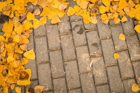 cobblestone: Autumn leaves scattered on a cobblestone street