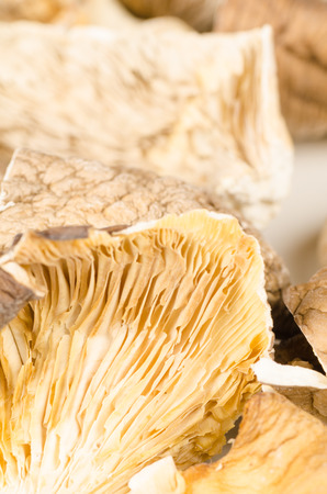 asian cuisine: Dehydrated and chopped oyster mushorooms, Asian cuisine ingredient Stock Photo