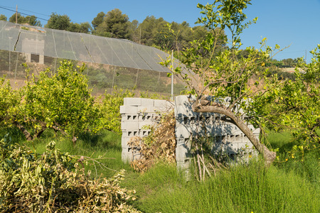 waste prevention: Agricultural burner made of concrete blocks and filled with waste from pruning citrus trees
