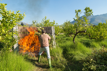 waste prevention: Farmer burning pruning waste inside a concrete structuro on his lemon tree plantation