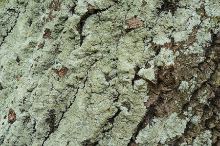 going green: Full frame take of tree bark going green from moss and fungus Stock Photo