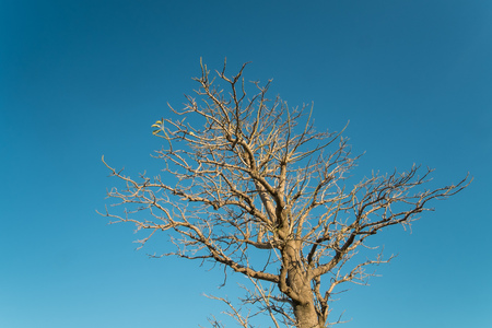 wintery: Bare wintery tree against the background of blue sky