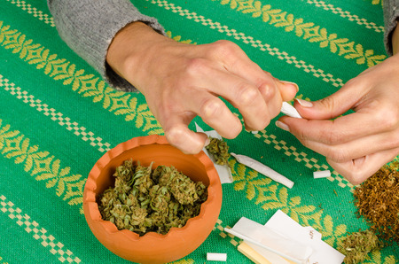 spliff: Female hands rolling a joint surrounded by the main ingredients Stock Photo