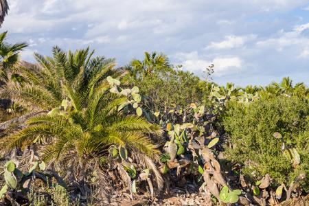 arid: Arid climate  flora, Cabo de Gata, Andalusia