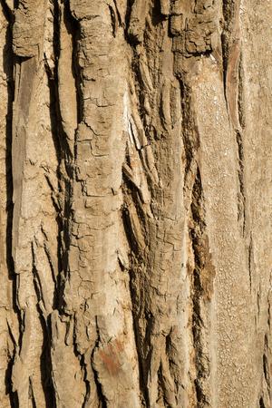 rugged: Full frame take of rugged tree bark texture Stock Photo