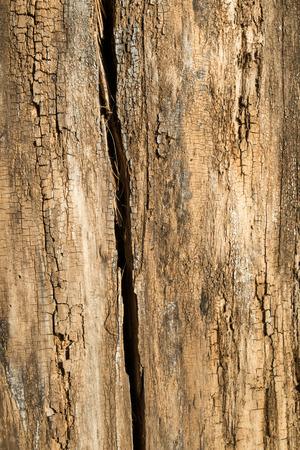 Full frame take of rugged tree bark texture Stock Photo