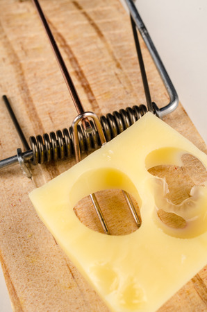 mouse trap: Cheese on a mouse trap, a conceptual  shot.