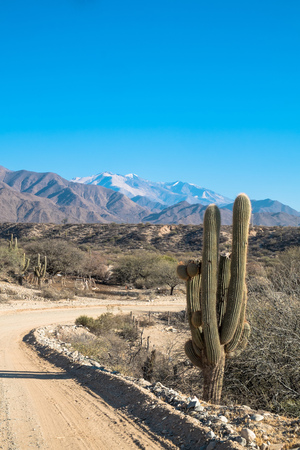 flanked: Andean dirt road in Salta province, Argentina, flanked by cardon cacti Stock Photo